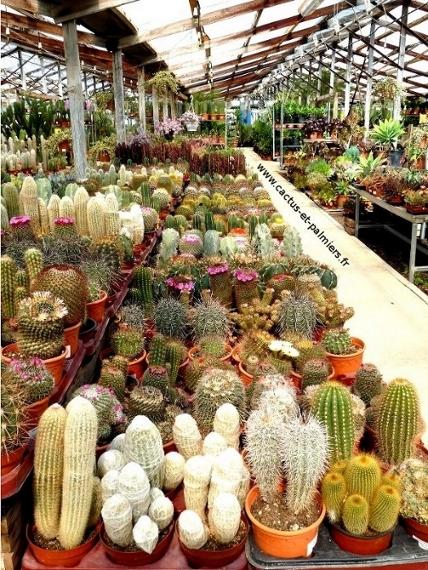 La ferme aux cactus - Un large choix de cactus et plantes grasses