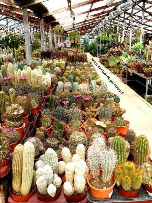 Qui sommes nous la ferme aux cactus for Plantes par correspondance