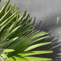 Palmiers et Cie